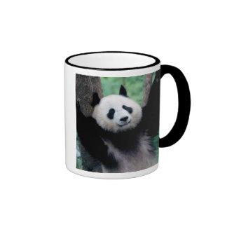 Cachorro de la panda, Wolong, Sichuan, China Taza De Dos Colores