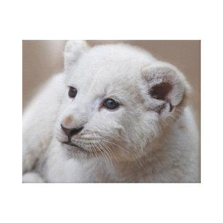 Cachorro de león blanco del viejo bebé de seis sem impresiones en lienzo estiradas