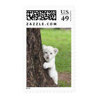 Cachorro de león blanco que oculta detrás de un sello postal