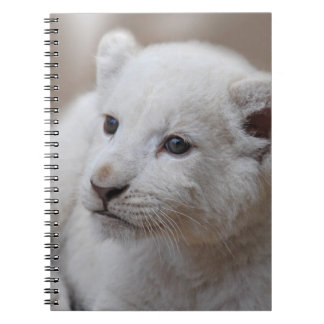 Cachorro de león blanco viejo de seis semanas del libros de apuntes