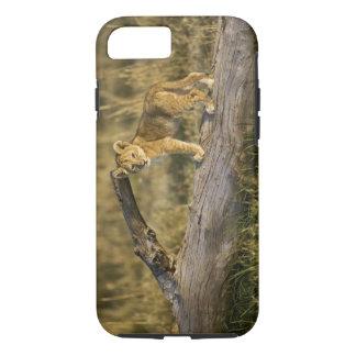 Cachorro de león en el registro, Panthera leo, Funda iPhone 7