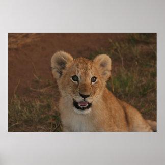 Cachorro de león en Masai Mara Impresiones