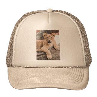 Cachorro de león gorras