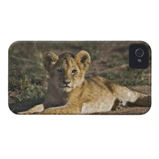 Cachorro de león, Panthera leo, mintiendo en Case-Mate iPhone 4 Coberturas