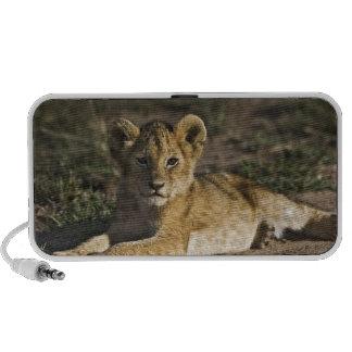 Cachorro de león, Panthera leo, mintiendo en pista Laptop Altavoces