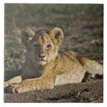 Cachorro de león, Panthera leo, mintiendo en pista Azulejo Cuadrado Grande