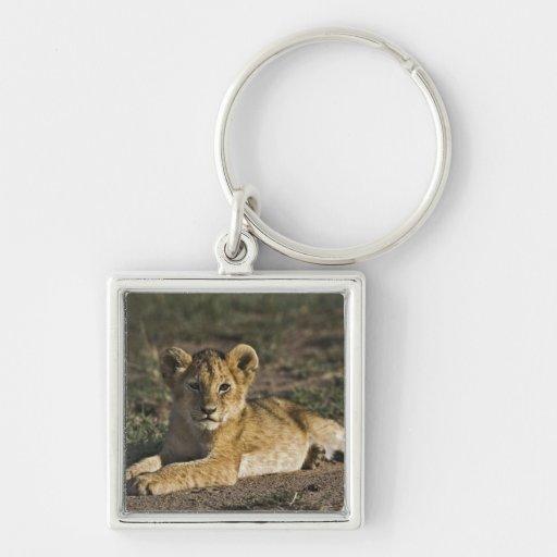 Cachorro de león, Panthera leo, mintiendo en pista Llavero Cuadrado Plateado