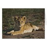 Cachorro de león, Panthera leo, mintiendo en pista Tarjeta De Felicitación
