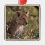 Cachorro de león (Panthera leo), nacional de Mara  Adorno