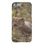 Cachorro de león (Panthera leo), nacional de Mara Funda De iPhone 6 Slim