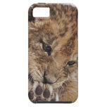Cachorro de león (Panthera leo) que lame la pata, Funda Para iPhone SE/5/5s