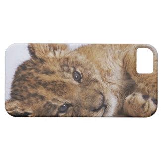 Cachorro de león Panthera leo que miente en el l iPhone 5 Carcasas