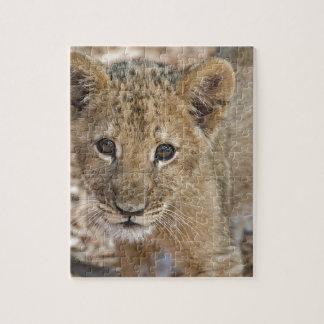 cachorro de león puzzle con fotos