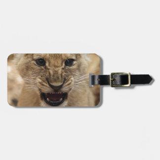 Cachorro de león que gruñe etiquetas maleta