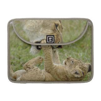 Cachorro de león que juega con el león femenino, M Fundas Macbook Pro