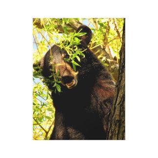 Cachorro de oso negro en árbol lona estirada galerías
