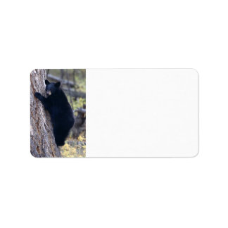 cachorro de oso negro etiqueta de dirección