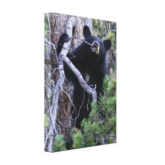 cachorro de oso negro lienzo envuelto para galerias
