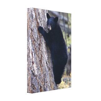 cachorro de oso negro impresión en lienzo estirada