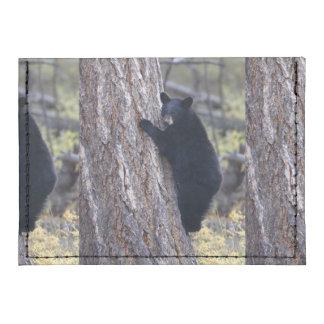 cachorro de oso negro tarjeteros tyvek®