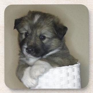 Cachorro de perro de islandia posavaso