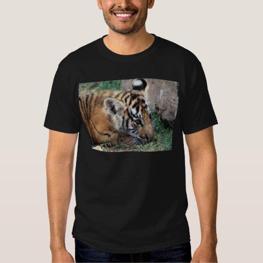 Cachorro de tigre de bebé que se acuesta polera