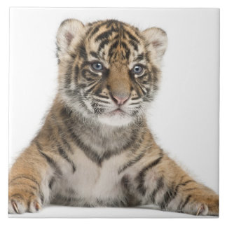 Cachorro de tigre de Sumatran Azulejo Cuadrado Grande