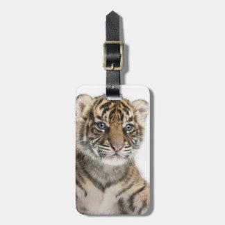 Cachorro de tigre de Sumatran Etiqueta De Equipaje
