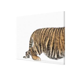 Cachorro de tigre de Sumatran Impresión En Tela