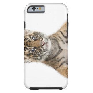 Cachorro de tigre de Sumatran - sumatrae del Funda Resistente iPhone 6
