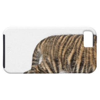 Cachorro de tigre de Sumatran - sumatrae del iPhone 5 Fundas