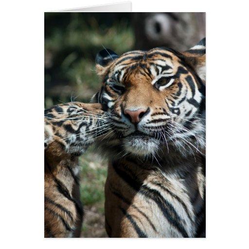 Cachorro de tigre felicitación