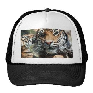Cachorro de tigre gorras