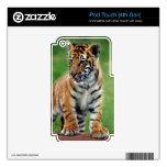 Cachorro de tigre lindo de bebé skins para iPod touch 4G