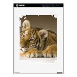 cachorro de tigre lindo pegatinas skins para iPad 3