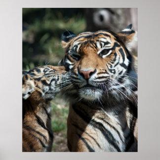 Cachorro de tigre impresiones