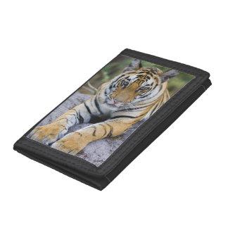 Cachorro de tigre, parque nacional de Bandhavgarh,