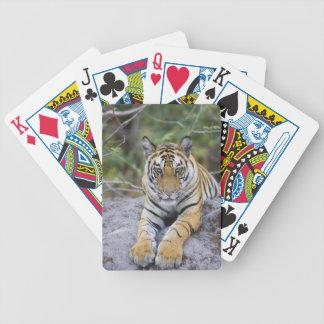 Cachorro de tigre, parque nacional de Bandhavgarh, Baraja De Cartas
