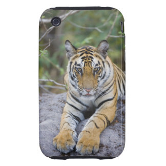 Cachorro de tigre, parque nacional de Bandhavgarh, Tough iPhone 3 Protector