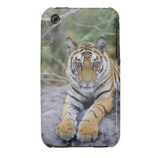 Cachorro de tigre, parque nacional de Bandhavgarh, iPhone 3 Case-Mate Coberturas