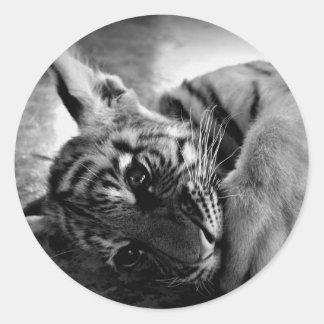 Cachorro de tigre pegatina redonda