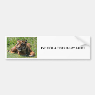 cachorro de tigre, pegatina para el parachoques pegatina para auto