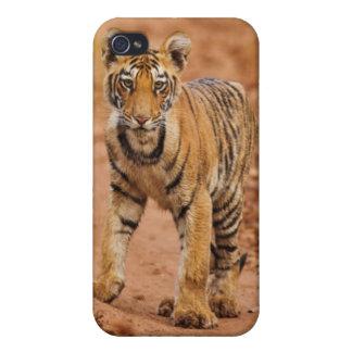 Cachorro de tigre real de Bengala en el movimiento iPhone 4/4S Carcasa