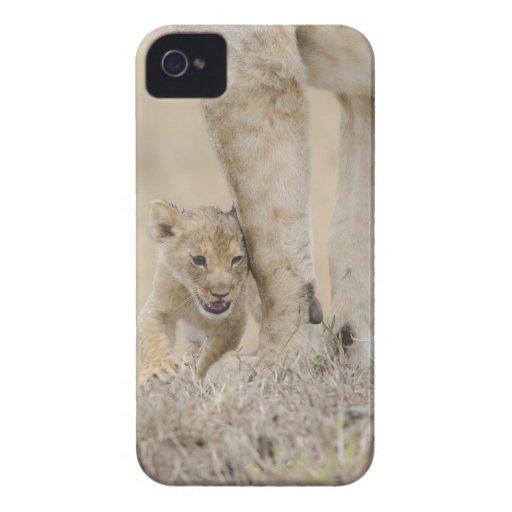 Cachorro del león (Panthera leo) que juega por los iPhone 4 Case-Mate Funda