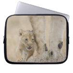 Cachorro del león (Panthera leo) que juega por los Fundas Ordendadores