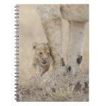 Cachorro del león (Panthera leo) que juega por los Libro De Apuntes Con Espiral