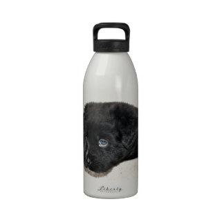 Cachorro en la taza botella de beber