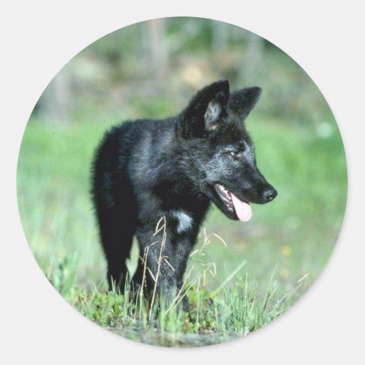 Cachorro gris del Lobo-verano (negro-fase) Pegatina Redonda
