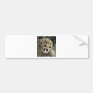Cachorro lindo del guepardo pegatina de parachoque