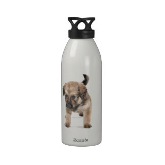 Cachorro pequeño botallas de agua